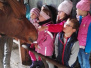 Island Pferde Spass